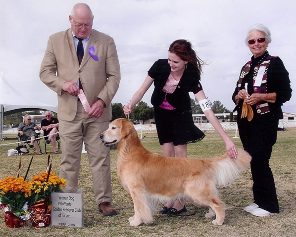 James Dean - Veteran Dog 2009 - Palo Verde Golden Reteiver Club of Tucson