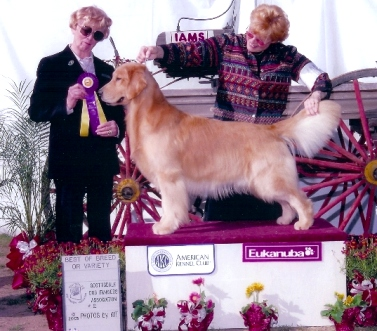 Best of breed - Scotsdale 2005